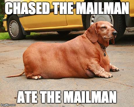 fat-dachshund-meme-1